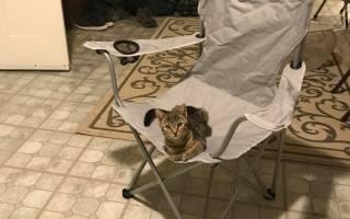 Одинокий мужчина пришел домой, а в его кресле сидит кот
