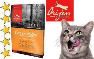Корма для кошек и котят Orijen (Ориджен): состав, цены, полный обзор