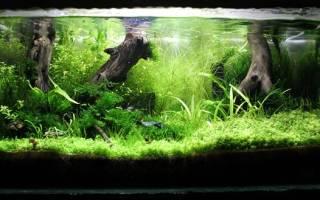 Развитие аквариума за год! Скажи нет стагнации.