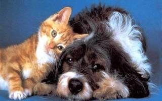 Кто лучше, кошки или собаки: таблица сравнения, тест, кого выбрать