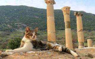 Как, откуда и когда появились кошки на земле и в России: 22 фото