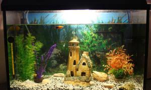 Разное видео по аквариумистике