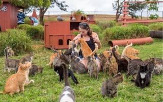 Мечта каждого кошатника: 600 котиков собраны в одном месте!
