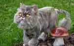 Как подстричь кота в домашних условиях машинкой и ножницами