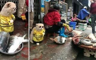 Стильный пушистый продавец рыбы на вьетнамском рынке