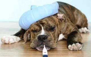 Болезни собак и их признаки: как распознать и что делать дальше?