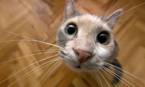 Котики и вода (GIF и видео): смешная подборка