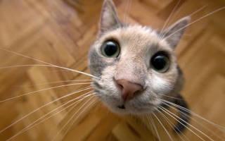 Как котики делают массаж: ГИФки, которые поднимут вам настроение