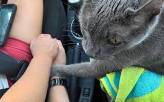 Кот всю последнюю поездку к ветеринару нежно держал руку хозяина