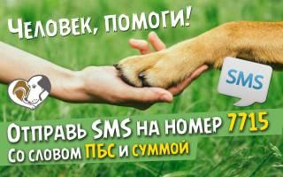 Приюты для бездомных животных Санкт-Петербурга: телефоны и ссылки