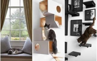 Как сделать дом максимально комфортным для котов