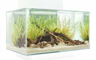 Правильный аквариум, какой он?