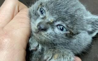 Малютка котенок хромал и мяукал, пытаясь найти любовь и понимание