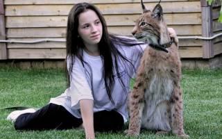 Кошки, похожие на рысь: 47 фото, дикие, гибриды, домашние