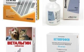 Обезболивающие для кошек: 8 разрешенных и 6 запрещенных