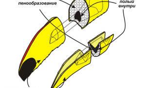Попугай тукан — с большим клювом: уход и содержание