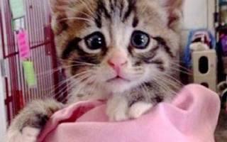 Один взгляд на этого котика растопит ваше сердце