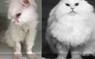 Женщина вырвала котика из лап неминуемой смерти