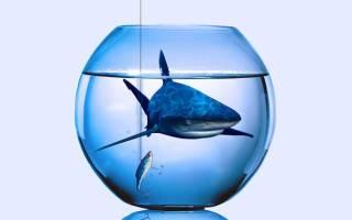 Небольшой аквариум из банки для начинающих
