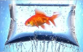 Как перевозить и пересаживать аквариумных рыбок