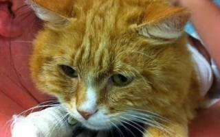 История рыжего кота Честера, которого спасла любовь