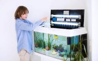Как ухаживать за домашним аквариумом и рыбками?