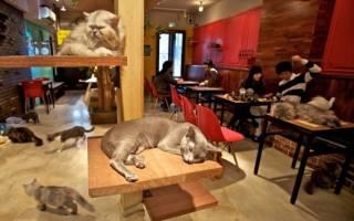Кафе с кошками в Москве: адреса и цены, что это такое, для чего нужны