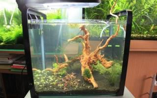 Оформление аквариума: фото, видео примеры