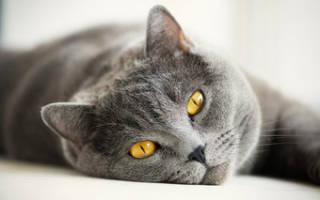 Увеличиваем продолжительность жизни кошки: 5 советов