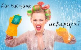 Как мыть аквариум? Советы и лайфхаки.