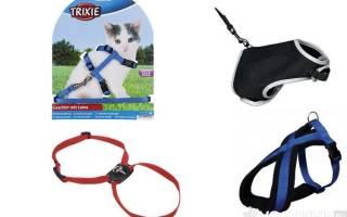 Шлейка для кошки: как правильно надеть, для чего нужна, цена