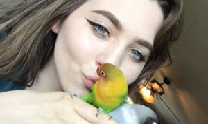 Разговаривают ли попугаи неразлучники — как научить говорить попугайчика