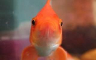 Как назвать рыбку? Выбираем имя для аквариумного питомца!