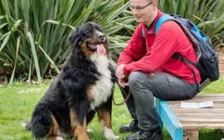Как сделать укол собаке внутримышечно?