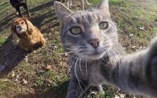 Кошка, которая обожает делать селфи, смешные фото кота