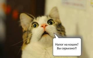 Налог на кошек: когда введут, что будет с владельцами животных