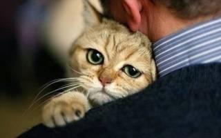Почему мы считаем, что кошка не такой уж «друг человека»