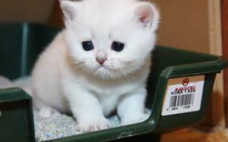 Кот не может пописать (сходить в туалет по маленькому): что делать