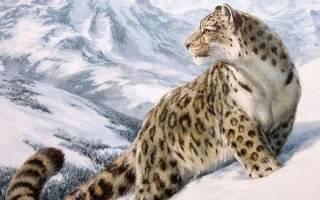 Красивые фото ирбисов или снежных барсов: милые, но грозные