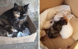 История мамы-кошки, которая спасала своего единственного котенка