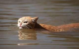 Люди остаются, чтобы спасти сотни кошек от наводнения