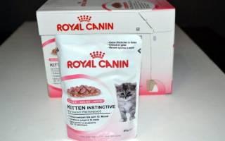 Корм Роял Канин (Royal Canin) для кошек и котов: вся линейка, цены