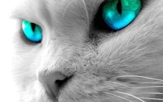 Как кошки видят наш мир, различают ли цвета, а потусторонний?