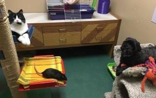 Кошка, собака и крыса из приюта нашли свою семью