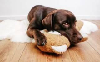 Отравление у собак: симптомы, первая помощь, лечение