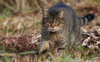 Интересные факты о кошачьих коготках, это нужно знать