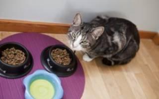 Чем лучше кормить кошку в домашних условиях: 3 вида питания
