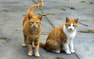 Лестница в тепло и любовь для бродячих кошек