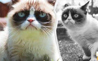 14 мая умерла интернет-легенда Grumpy Cat (Сердитая кошка)