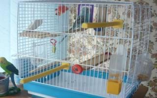 Как обустроить клетку для попугая — что должно быть?